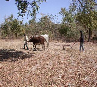 case-agrarisch