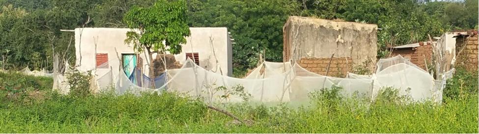 Blog: Mosquito nets