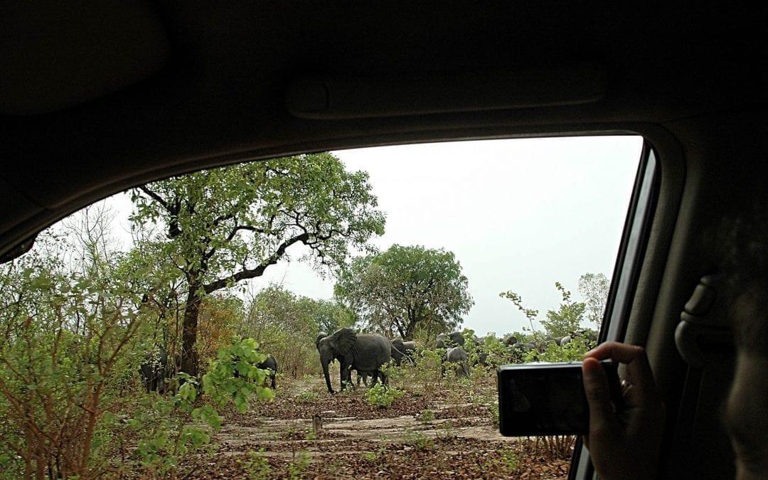 Blog: Elephants