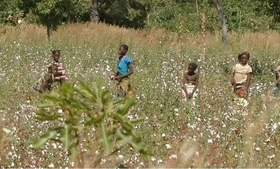 Cotton farmers in Burkina Faso