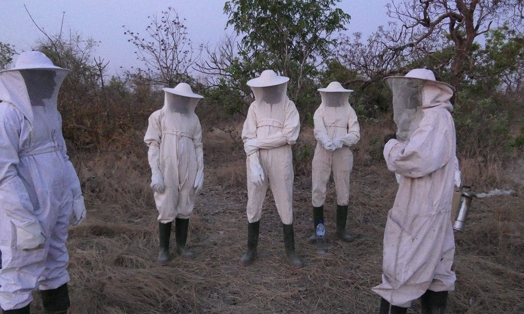 Beekeeping in Burkina Faso