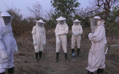 Beekeeping in Burkina Faso
